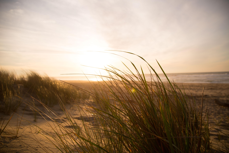 beach-dune-grass-7763