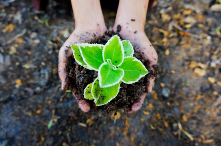 Business Retention and Expansion: Start With the Soil
